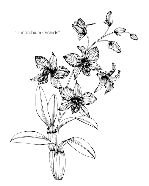 Illustration De Dessin De Fleur Dorchidée Télécharger Des