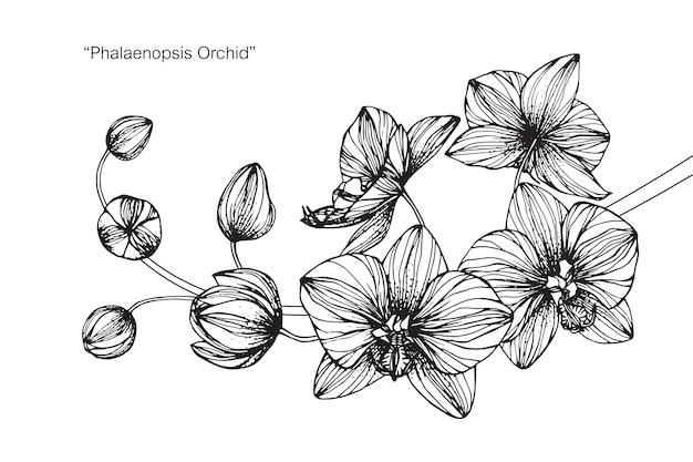 Dessin Fleur D Orchidée illustration de dessin de fleur d'orchidée   télécharger des