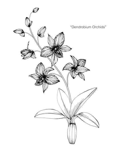 Illustration De Dessin De Fleur Dorchidée Télécharger