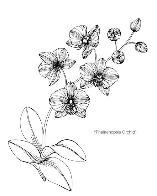 Dessin Fleur D Orchidée illustration de dessin de fleur d'orchidée.   télécharger des