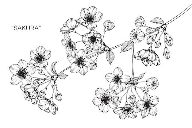 Illustration De Dessin Fleur Sakura Telecharger Des Vecteurs Premium