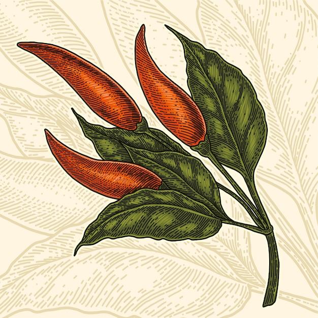 Illustration De Dessin Vintage Main Piment Rouge Peper Vecteur Premium