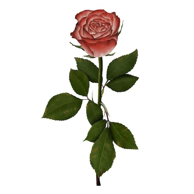 Illustration Dessinée à La Main Dune Fleur Rose Vecteur Premium