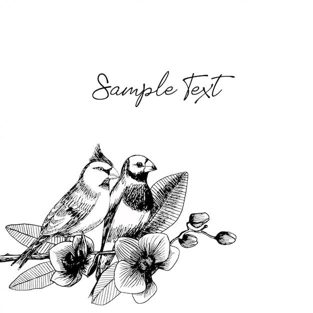 Illustration Dessinée à La Main De La Paire D'oiseaux Avec Des Fleurs D'orchidées Vecteur Premium