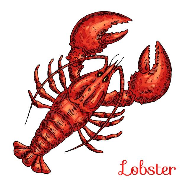 Illustration de dessinés à la main de homard Vecteur Premium