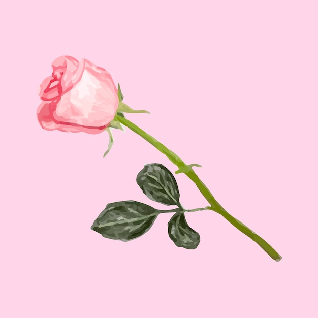 Illustration Du Dessin Fleur Rose Telecharger Des Vecteurs