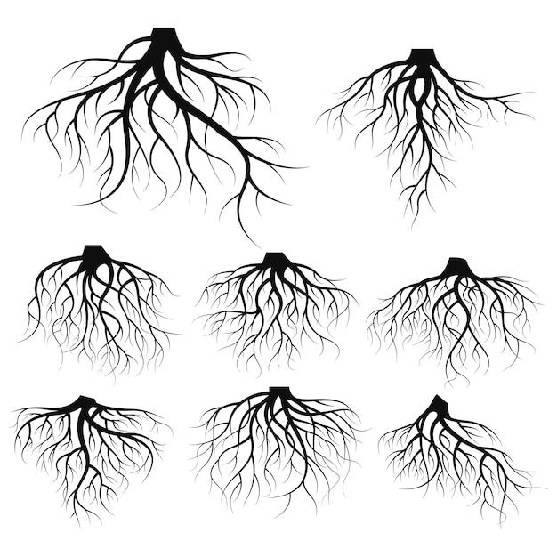 Illustration: ensemble de racines d'arbres Vecteur Premium