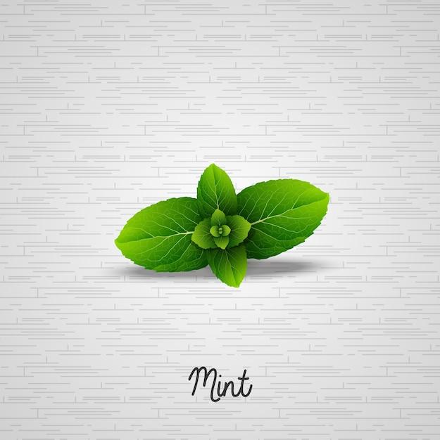 Illustration de feuilles de menthe fraîche réalistes Vecteur Premium
