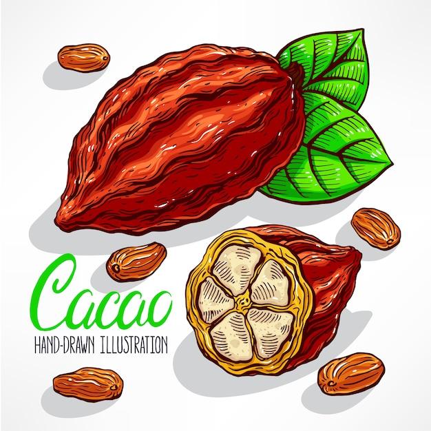 Illustration De Fève De Cacao Vecteur Premium