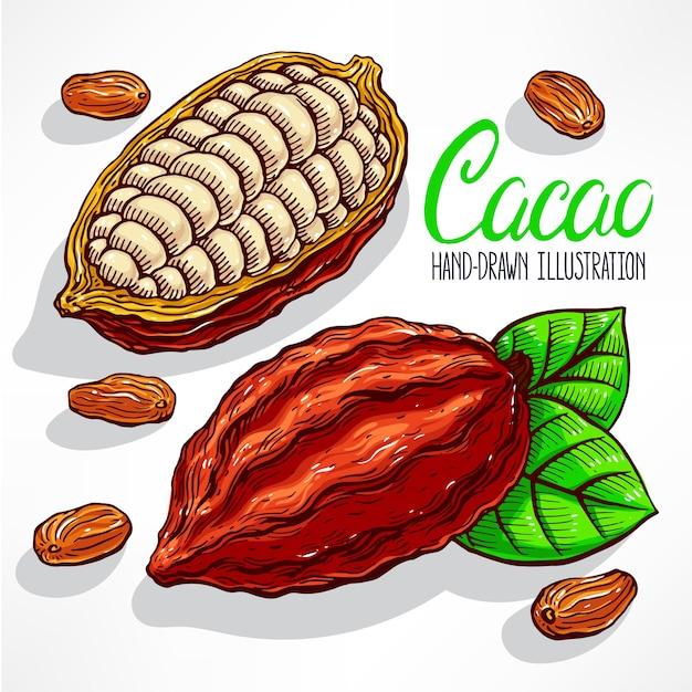 Illustration De Fèves De Cacao, De Fruits Et De Feuilles Vecteur Premium