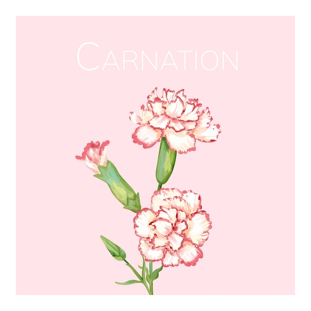 Illustration de fleur oeillet dessinés à la main Vecteur Premium