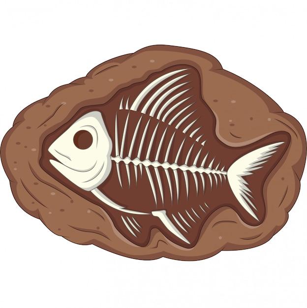 Illustration d'un fossile de poisson souterrain Vecteur Premium