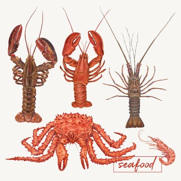 Illustration de homards et crabes Vecteur Premium