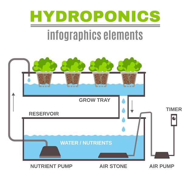 Illustration Hydroponique Infographique Vecteur gratuit