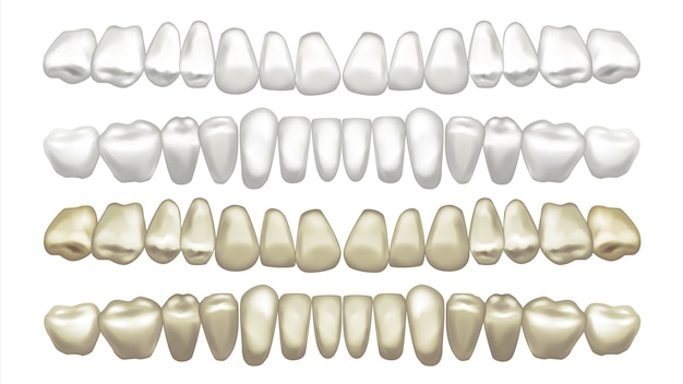 Illustration De Jeu De Dents Vecteur Premium