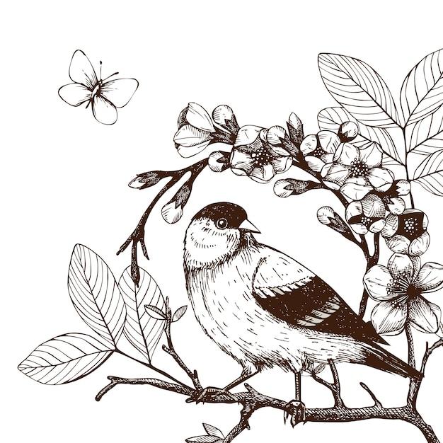 Illustration Avec Main Dessiner Oiseau Sur Un Rameau D Arbre En Fleurs Croquis Vintage D Oiseau Esquisse A La Main Vecteur Premium