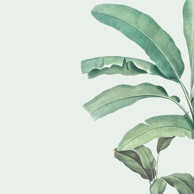 Illustration de la maquette de l'été tropical Vecteur gratuit