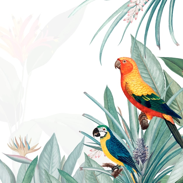 Illustration de maquette tropicale macaw Vecteur gratuit