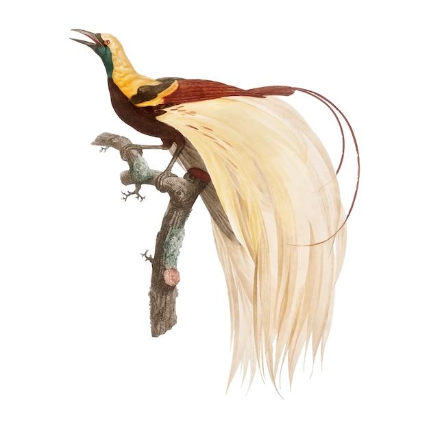 Illustration d'oiseau vintage Vecteur gratuit