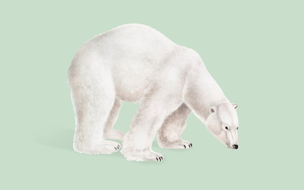 Illustration D'ours Polaire Vecteur gratuit