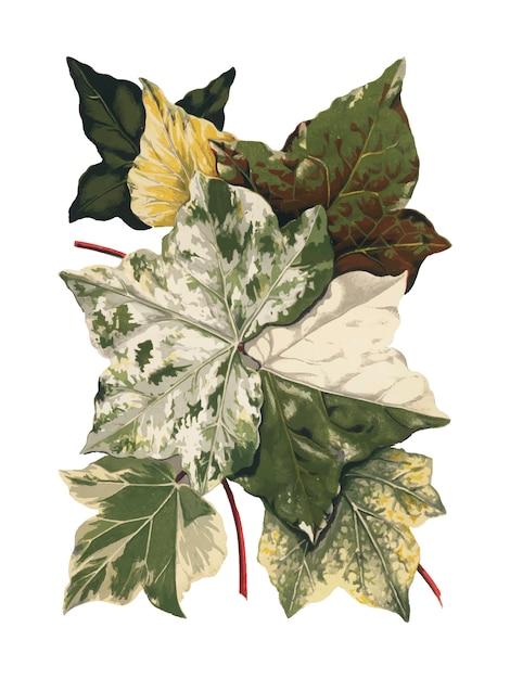 Illustration de plantes et de feuilles vintage Vecteur gratuit
