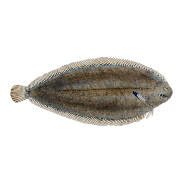 Illustration de poisson vintage Vecteur gratuit