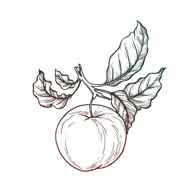 Illustration De Pomme Noir Et Blanc Vecteur Premium