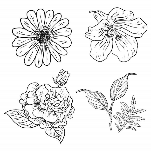 Illustration de quatre fleurs classiques Vecteur Premium