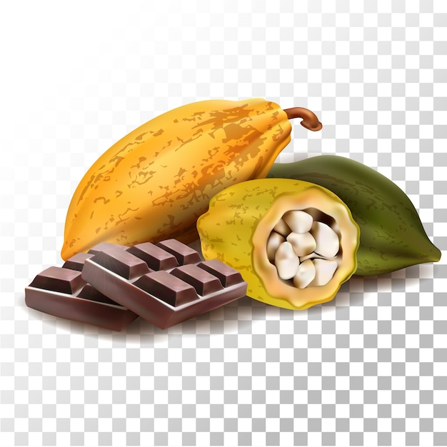 Illustration Réaliste De Chocolat Aux Fruits De Cacao Vecteur Premium