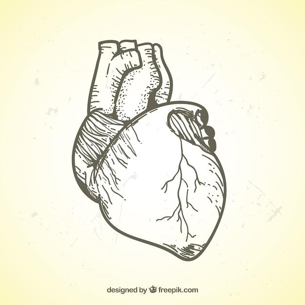Illustration réaliste de coeur dessiné à la main Vecteur gratuit