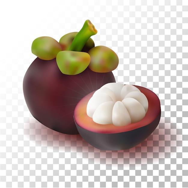 Illustration Réaliste De Mangoustan Vecteur Premium