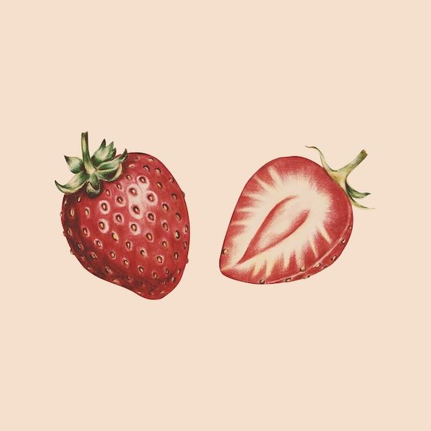 Illustration de style aquarelle de fruits Vecteur gratuit