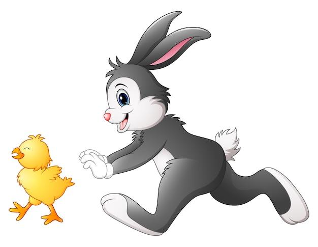 Illustration de vecteur de dessin animé drôle de lapin à la poursuite de poussin Vecteur Premium