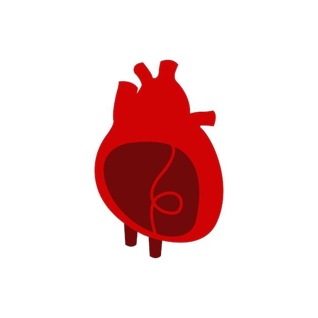 Illustration vectorielle de coeur organe isolé Vecteur gratuit