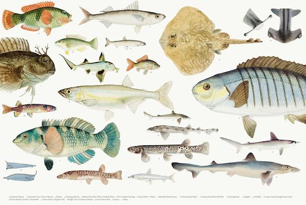 Illustration vectorielle colorée de la collection de dessin de poisson Vecteur gratuit