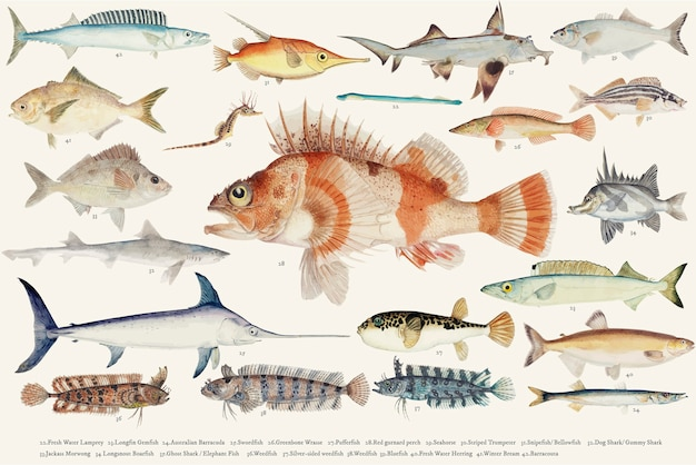 Illustration vectorielle colorée de la collection de dessin de poisson Vecteur gratuit