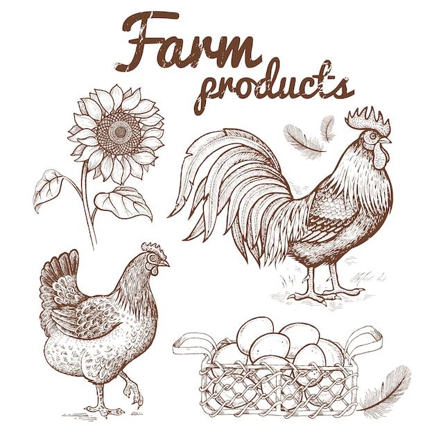 Illustration vectorielle d'un coq, poulet et panier avec des oeufs, Vecteur Premium
