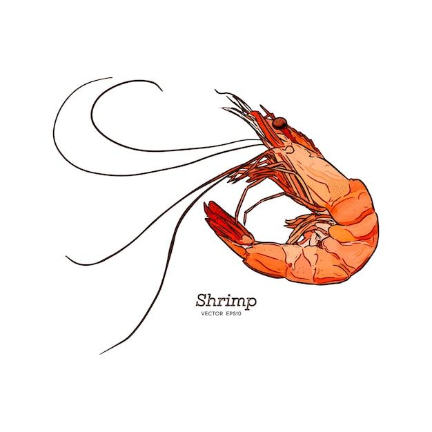 Illustration vectorielle de crevette mer caridea animaux gravure. Vecteur Premium