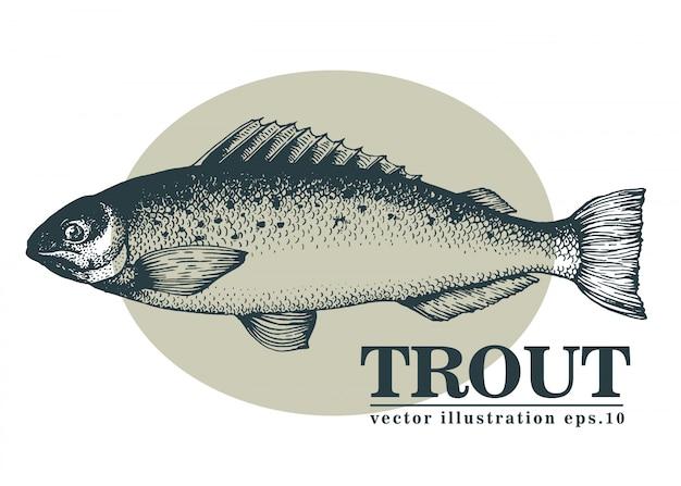 Illustration vectorielle dessinés à la main de poisson de truite. Vecteur Premium
