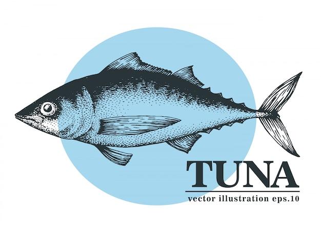 Illustration vectorielle dessinés à la main de thon. Vecteur Premium