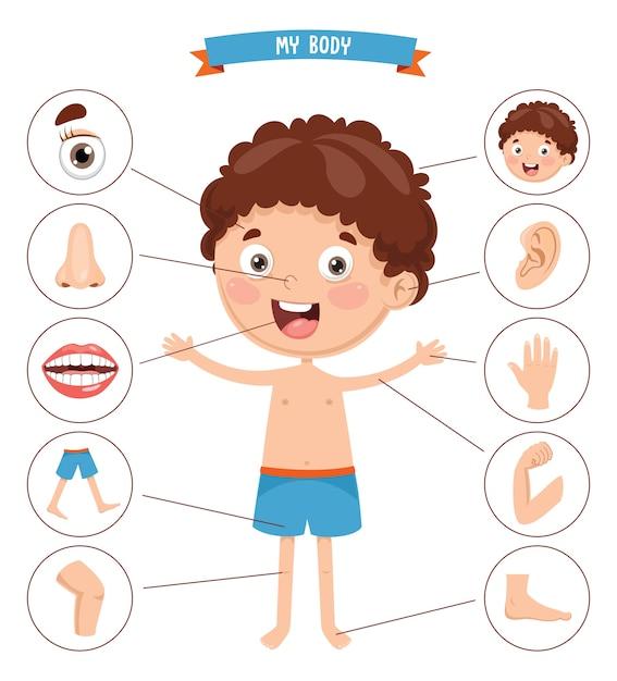 Illustration vectorielle du corps humain Vecteur Premium