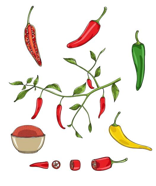 Illustration vectorielle de poivrons piment Vecteur Premium