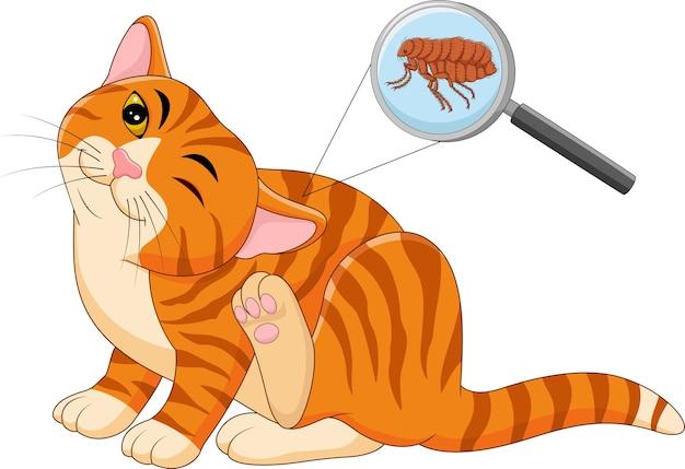 Illustration Vectorielle De La Puce Chat Infesté Vecteur Premium