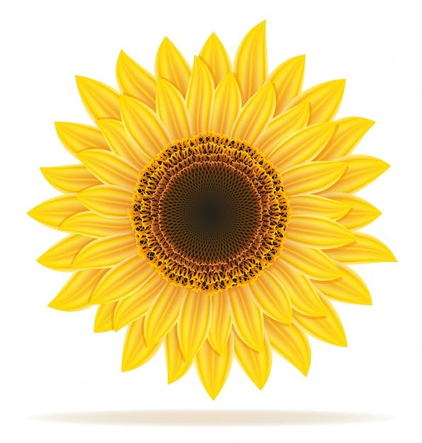 Illustration vectorielle tournesol Vecteur Premium