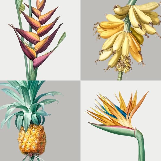 Illustration vintage de l'ensemble des plantes tropicales Vecteur gratuit