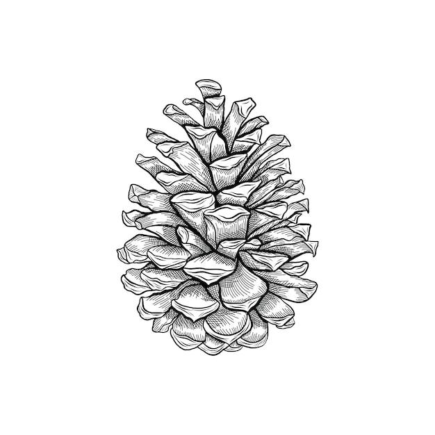 Illustration vintage de gravure de pomme de pin Vecteur Premium