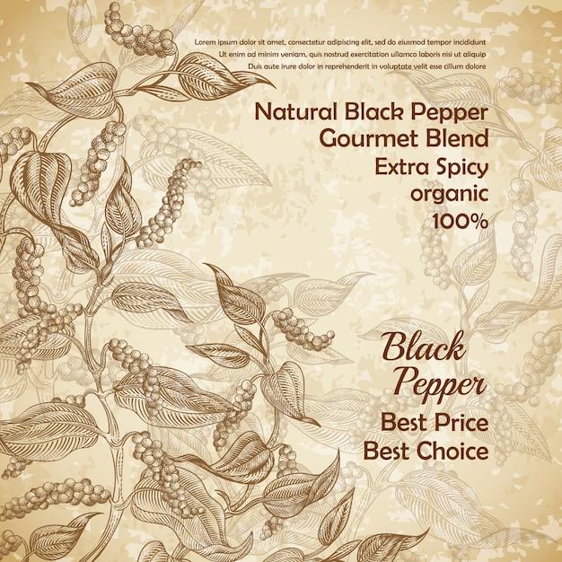 Illustration vintage de poivre noir avec des feuilles et des grains de poivre Vecteur gratuit