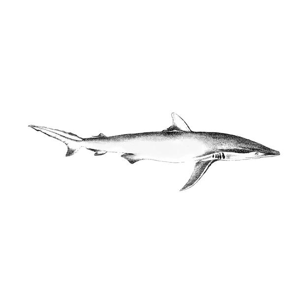 Illustration vintage de requin Vecteur gratuit