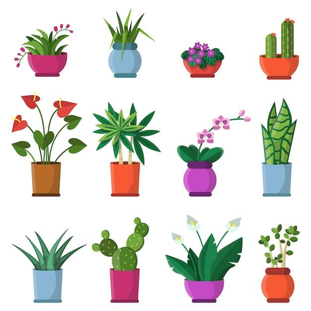Illustrations vectorielles de plantes d'intérieur en pots Vecteur Premium