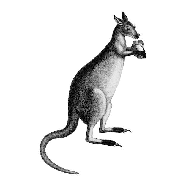 Illustrations vintages de kangourou gris bleu Vecteur gratuit
